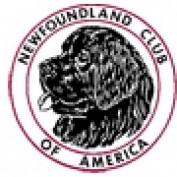 newfclub profile image