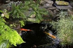 Pond supplies make a beautiful pond possible