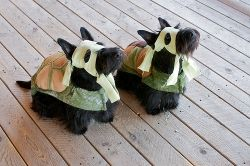 Ninja Scotties