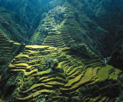 Actual Banaue Rice Terraces!