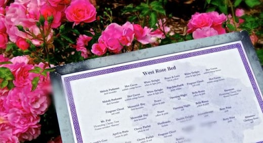 English rose garden rose map.