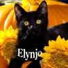 Elynjo profile image