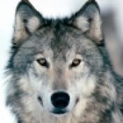bman227 profile image