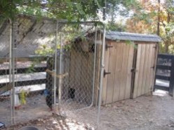 Types Of Fencing For Chickens - What Are Your Options