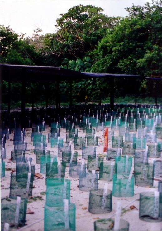Turtle Hatcheries, Selingan, Turtle Island, Borneo, Malaysia