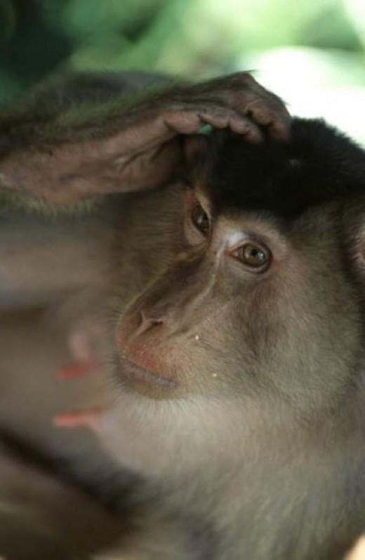 A Borneo Resident