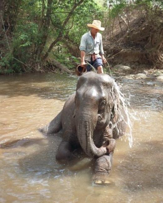 Elephant Nature Park near Chiang Mai