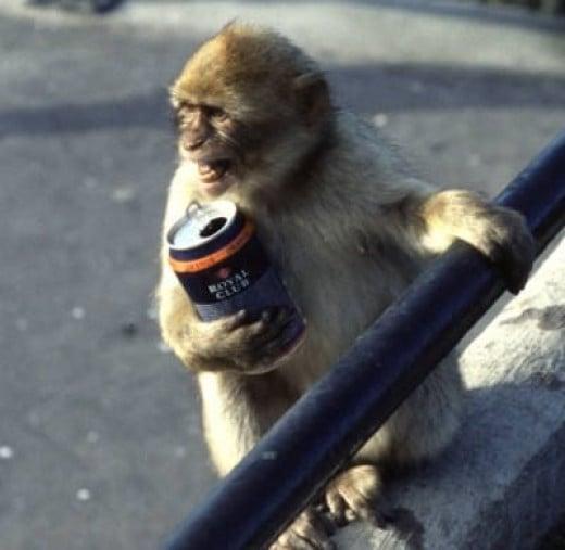 Monkey with a Drink Problem