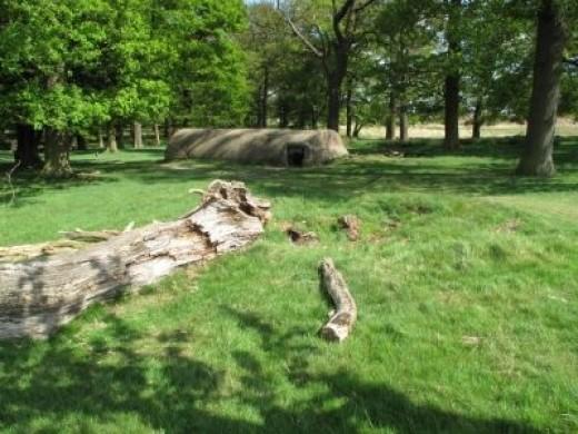 Sample Photo: Richmond Park
