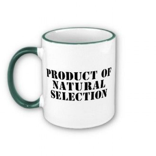Product of Natural Selection Mug. Darwin's theory of natural selection and evolution challenged many creationist theories.  But was evolution all part of God's plan?