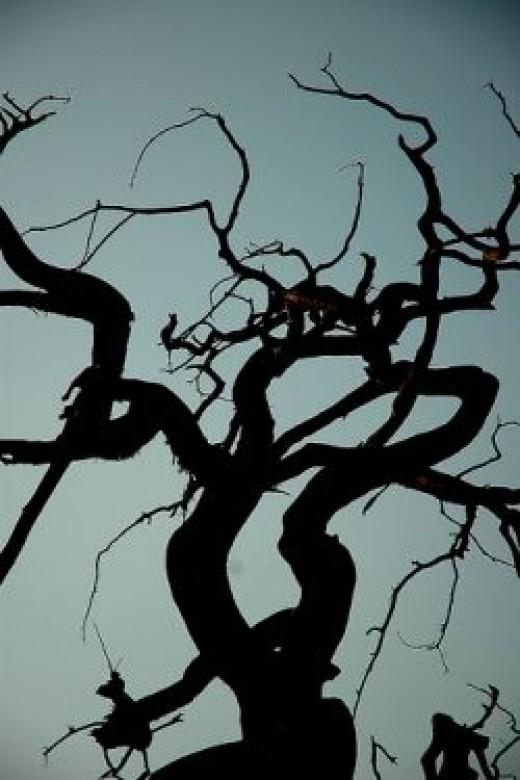 Scary Halloween Tree Silouette