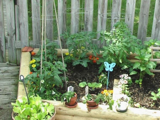 I am trying to save money by reusing cages from last year. I also had some short bamboo stakes that I put on the heirloom tomato plant in the front left corner.