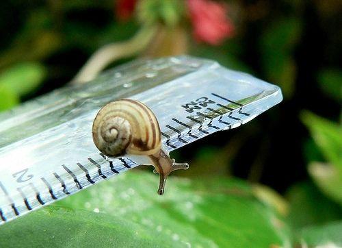 Measuring a Snail