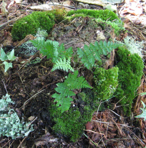 Here I added some moss to an existing stump. The little fern would look great with a fairy next to it.